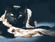 cat-2338160_1920